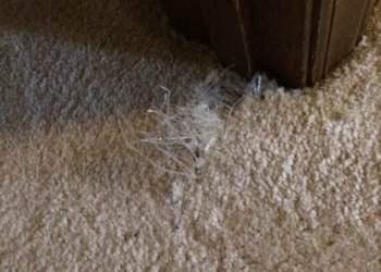 Carpet Damage - Before Carpet Repair